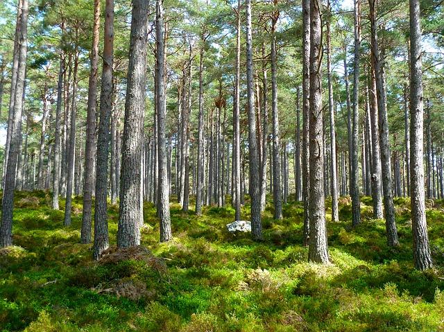 5 campañas ecologistas que te dejarán con la boca abierta
