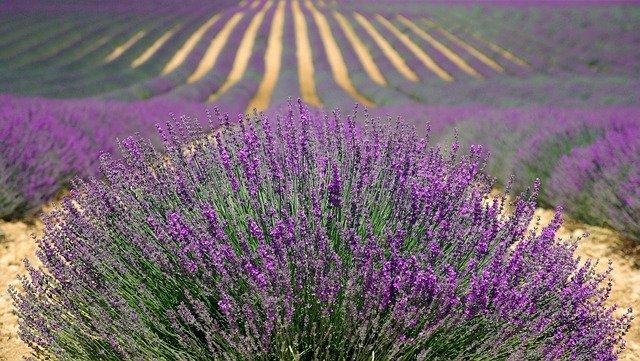 Plantas y flores: la materia prima de Terai Cosmética